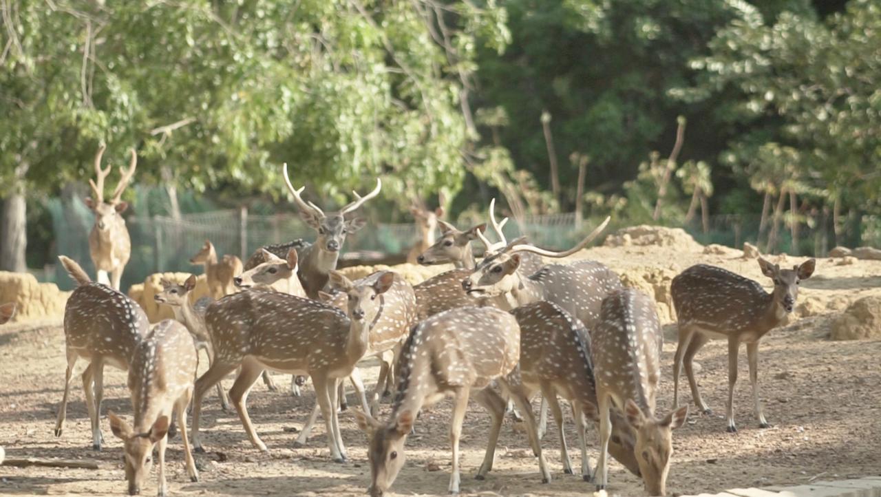 Foto Batam, BP Batam, Kolam taman rusa, Kota Batam, Taman rusa batam, taman rusa sekupang