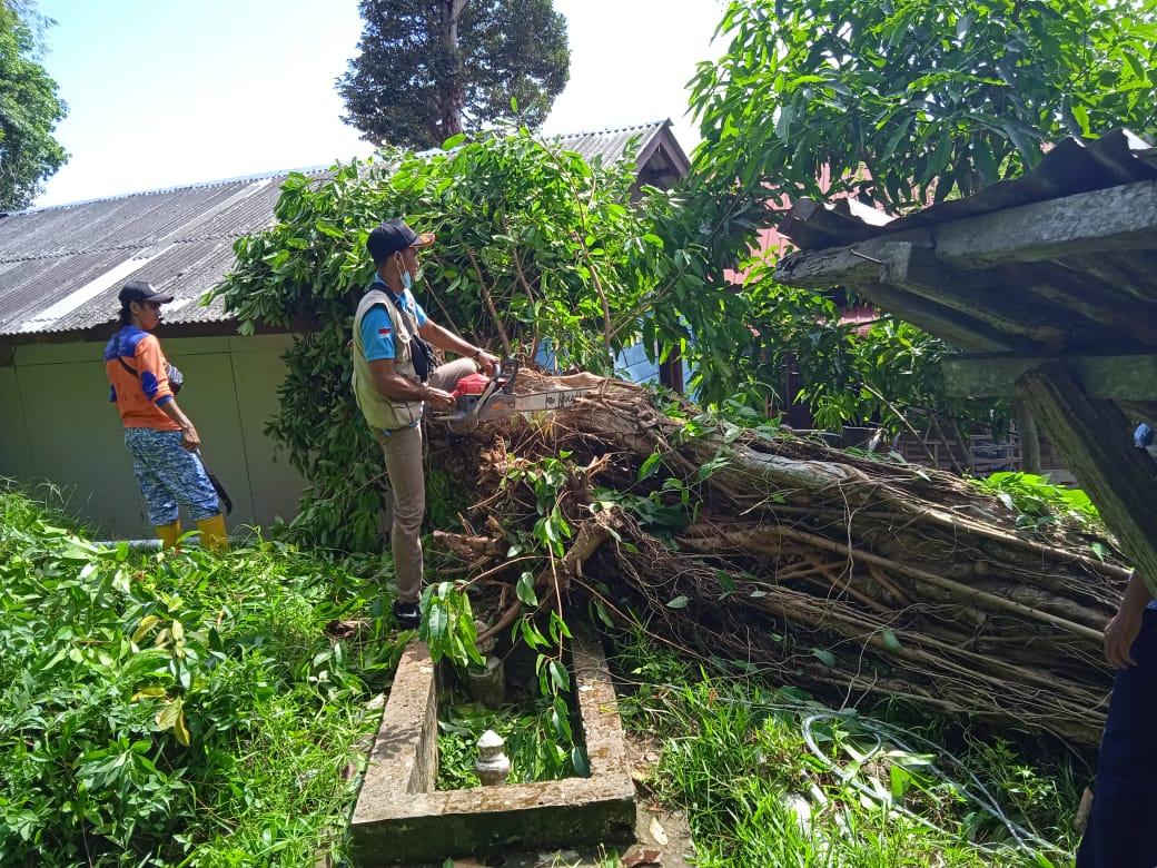 Foto bersihkan pohon tumbang, bpbd anambas, Kab Anambas, pohon tumbang, pohon tumbang di tarempa, rumah warga di tarempa, Tarempa